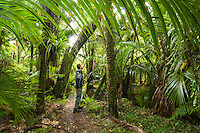 Hiker admiring Nikau Palm forest at Kohaihai on Heaphy Track, Kahurangi National Park, West Coast, Buller Region, New Zealand