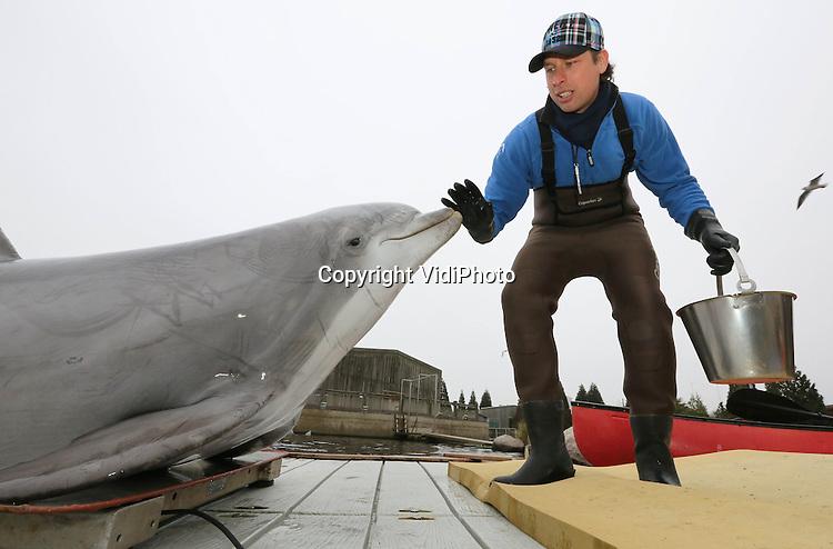 Foto: VidiPhoto. .HARDERWIJK - Dolfijnen in het Dolfinarium in Harderwijk worden maandag gewogen om hun gezondheid en conditie te controleren. Omdat er op dit moment vanwege de verbouwing van het dolfijnentheater vrijwel niet getraind kan worden, verblijven de acht showdolfijnen op dit moment in een voor hen onbekende omgeving, de DolfijnenDelta bij de Lagune in het Dolfinarium. Normaal gesproken kan er tijdens de wintersluiting een half jaar lang geoefend worden voor een nieuwe show. Dit keer is dat hooguit een maand. Pas eind deze maand is het dolfijnentheater gereed en kunnen de dolfijnen terug naar hun vertrouwde plek. .