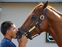 Hotwalker Cesar Atilano gets up close with Derby prospect I'll Have Another after morning workouts for the Kentucky Derby and Kentucky Oaks at Churchill Downs in Louisville, Kentucky on April 30, 2012.