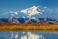 Denali reflects in a small kettle pond in the autumn tundra of Denali National Park, Alaska.