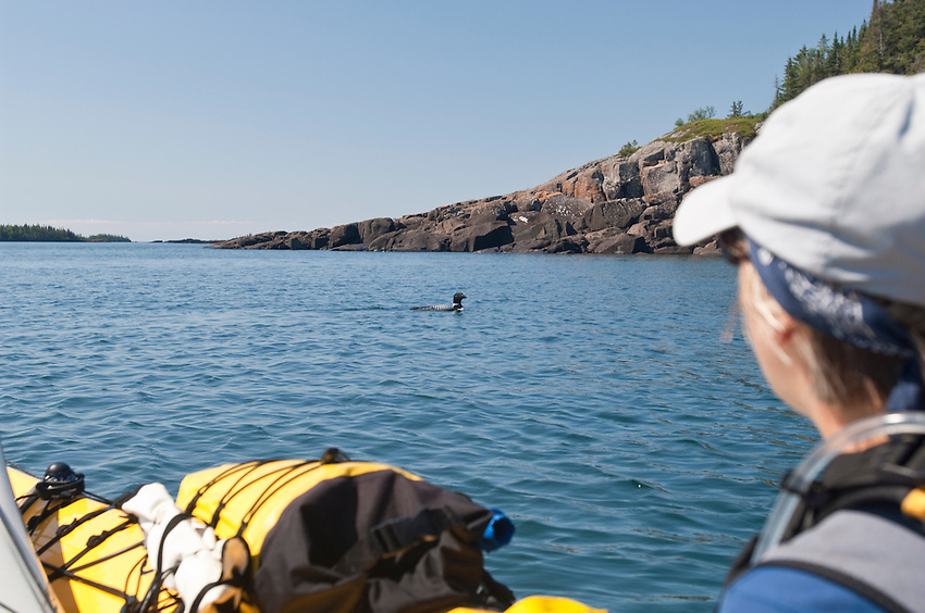 A common loon approaches a kayaker at Isle Royale National Park.