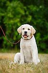 20160628 Martha More Pets