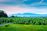 Recent Costa Rica