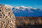 A stack of antler sheds with a backdrop of the Mission Mountains from the National Bison Range in western Montana