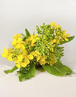 Flowering Broccoli Rabe