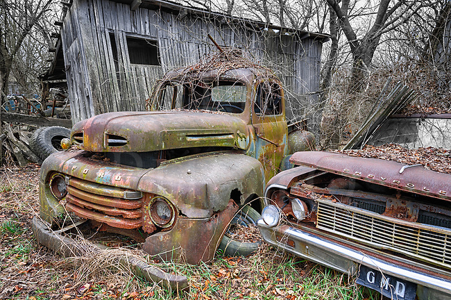 An old Ford pickup from the early 1950's next to a derelict 1964 Chevy Malibu in an old farmyard junkyard in the Pennsylvania countyside, a hand tinted half black and white photograph.