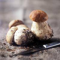 Champignons / Mushrooms