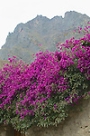 Flowers At Ollantaytambo
