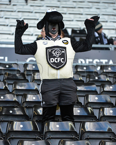 21.2.2015.  Derby, England. Skybet Championship. Derby County versus Sheffield Wednesday. A passionate Derby County fans shows off his Ram outfit.