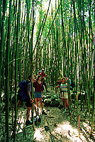 These hikers (MR) are taking a break in a bamboo forest in the West Maui Mountains on the island of Maui, Hawaii.