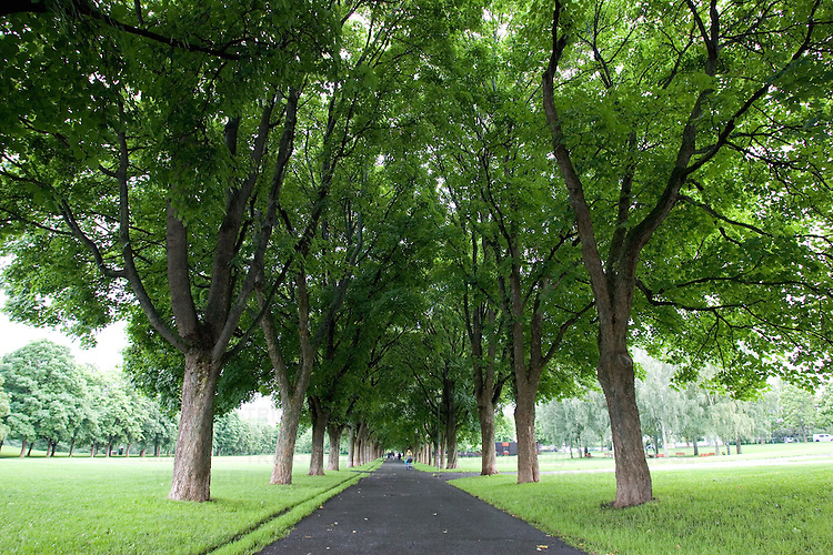 Summer in a park with green trees