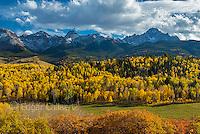 Aspen, Populus Tremula, Oak, Quercus Gambelii, Sneffels Range,  Dallas Divide, Uncompahgre National Forest, Colorado