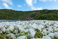 Salt foam from the salt pond<br /> Salt Pond Bay<br /> Virgin Islands National Park<br /> St. John<br /> U.S. Virgin Islands