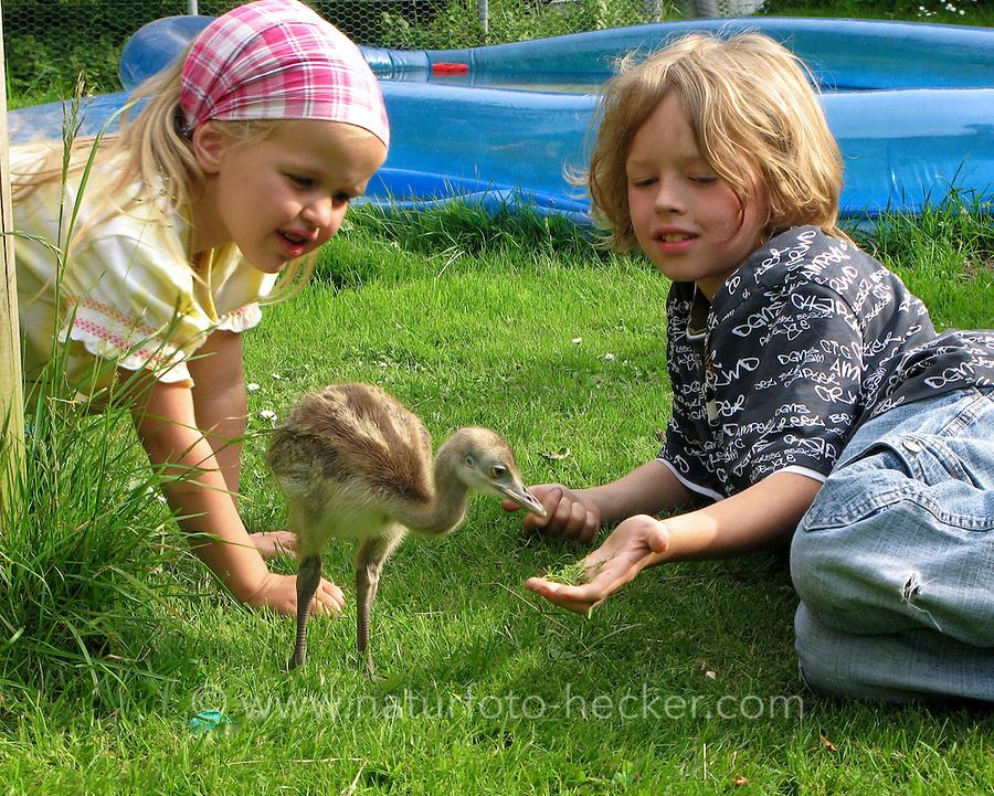 Kinder spielen mit Nandu - Küken im Garten, Wildtierhilfe Fiel, greater rhea