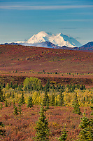 Mt. McKinley north and south summits visible across the autumn tundra, Denali National Park, interior, Alaska.