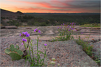 Near the top of Enchanted Rock in the State Park, this small purple flower blooms just before the sun makes its first appearance of the day.