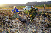 A Russian border guard with a wild pig on the Tadzhik-Afghan frontier at P'andz, with electric barbed wire, anti personal mine, mirador and Russian military patrol.