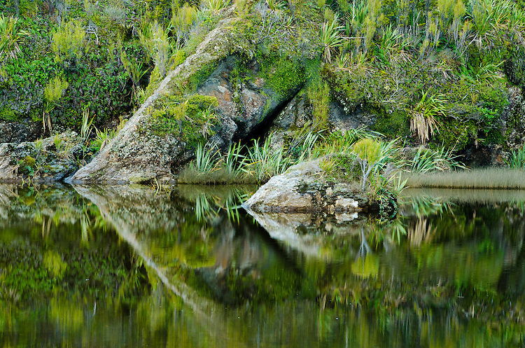 Native bush reflected in a pool at Ship Creek, South Westland, New Zealand - stock photo, canvas, fine art print