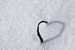 A stick creates a heart-shaped shadow in the snow in Acadia National Park, Maine, USA