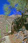 Trail  hiking in Sabino Canyon  Tucson Arizona