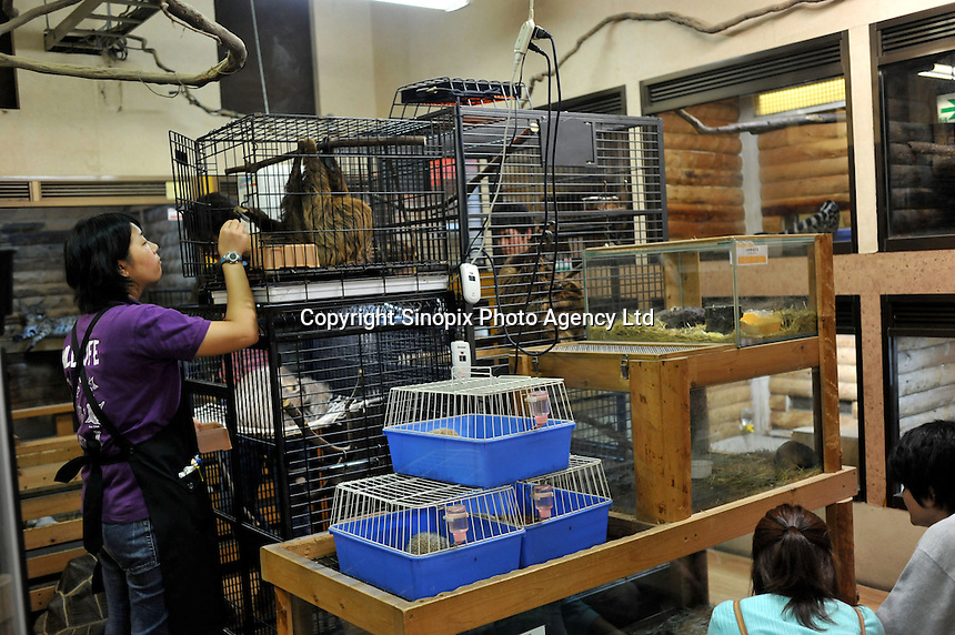 A lady look at a Sloth in its cage at the Noah Inner City Zoo. The Noah Inner City Zoo is a pet shop that sells exotic animals. The 'zoo' claims to have more than 300 species for sale, many of which are rare and some are even endangered.