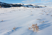 Lamar Valley in Yellowstone National Park during winter