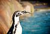 London Zoo<br /> Annual stocktake <br /> 2nd January 2014 <br /> London Zoo, Regent's Park,<br /> London, Great Britain <br /> <br /> Silverback <br /> Gorilla Kingdom <br /> Kumbuka<br /> Mjukuu<br /> Effie<br /> Zaire<br /> <br /> Penguins<br /> Meerkats<br /> <br /> Bugs House<br /> Jungle Nymph <br /> Craig Walker deputy team leader <br /> <br /> Owls <br /> Max - Eagle Owl with keeper Jamie Pearce<br /> Elton - spectacled owl with keeper Angela Ryan<br /> Alberta - tawny owl with keeper Adam <br /> <br /> Pelicans <br />  <br /> <br /> Photograph by Elliott Franks