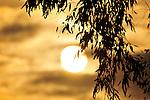 Sunsets,nature beach