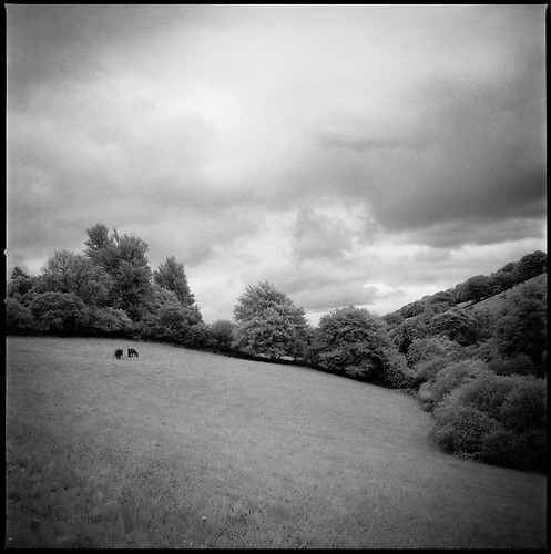 Woodland, Tarr Steps, Exmoor, 2011 by Paul Cooklin