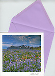 Lupine meadow<br />