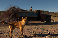 A local worker gathers wood for brick-making kilns outside of Gaiman, a small town in Patagonian Argentina. Welsh immigrants tames the desolate land along the Rio Chubut in the 1860s. Their ancestors now embrace their Welsh roots in more than a dozen teahouses. (Kevin Moloney for the New York Times)