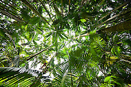 Palm forest in Hawaii Tropical Botanical Garden, Big Island, Hawaii