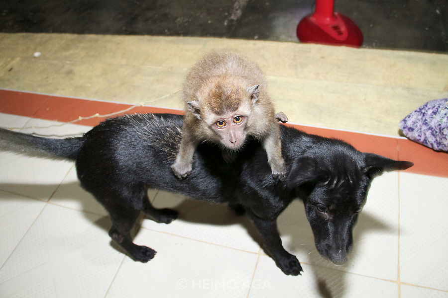 Koh Lipe. Ping, the macaque with his dog friend.