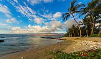 A green sea turtle (or honu) rests on a quiet, calm, small beach in Puako, Big Island.