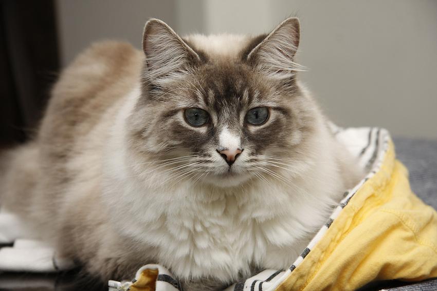How To Detangle Your Cat S Coat