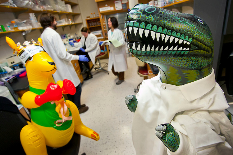 "(l-r) ""Skippy"" and ""Rex"" hang out in the David Tobin lab over the winter break.  Image was shot for the DD360 project."