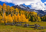 Mount Sneffels, located in the heart of the San Juan Mountains in southwest Colorado, rises above a forest of golden apsens.