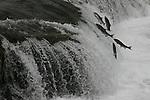 jumping salmon at Brooks Falls