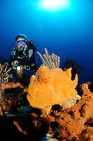 Antennariun commerson, Riesen Anglerfisch, Giant frogfish, Bali, Seraya Secret, Tulamben, Indonesien, Indopazifik, Bali, Indonesia Asien, Indo-Pacific Ocean, Asia