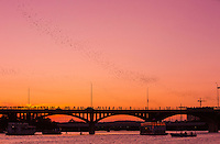 The Congress Avenue bridge spans Lady Bird Lake in downtown Austin and is home to the largest urban bat colony in North America. The colony is estimated at 1.5 million Mexican free-tail bats. Each night from mid-March to November, the Congress Bridge Bats bats emerge from under the bridge to blanket the sky as they head out to forage for food. This event has become one of the most spectacular and unusual tourist attractions in Texas. The most spectacular bat flights are during hot, dry August nights, when multiple columns of bats emerge. There are several points from which to view the Austin bats emerge and an information kiosk is located on the north bank of the Lady Bird Lake, just east of the bridge.