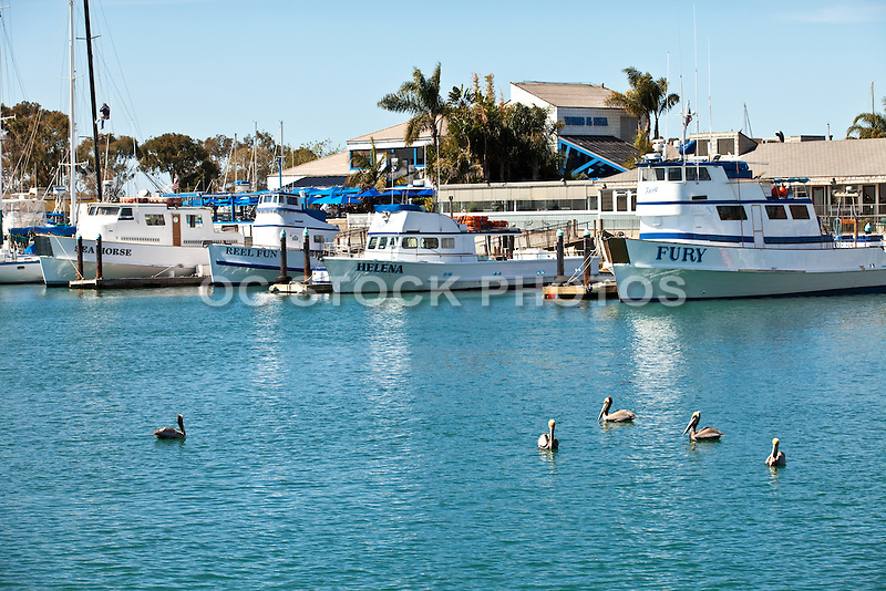 Fishing boats docked in dana point harbor socal stock for Dana point harbor fishing