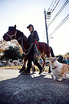 "A horse used in a ""yabusame""  ritual is lead to the arena where a yabusame ritual will be performed in Machida, western Tokyo, Japan on Nov. 28 2010. During the late Heian era (794 to 1185) and Kamakura era (1185-1333) such archery was the domain of high-ranked samurai and was used as a military training exercise to keep samurai prepared for war. .Photographer: Robert Gilhooly"