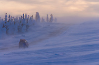 Heavy winds and snow blow across the James Dalton Highway, Arctic, Alaska