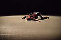 London, UK. 16.09.2014. BalletBoyz present THE TALENT 2014 in a new triple bill at the Linbury Studio Theatre, September 16th - 27th as part of the Deloitte Ignite 2014, the contemporary arts festival curated by the Royal Ballet and Minna Moore Ede of the National Gallery. The dancers are: Andrea Carrucciu, Simone Donati, Flavien Esmieu, Marc Galvez, Adam Kirkham, Edward Pearce, Leon Poulton, Matthew Rees, Matthew Sandiford, Bradley Waller. Picture shows: THE MURMURING by Alexander Whitley. Photograph © Jane Hobson.