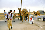 Israel 1982. Rafah border crossing. Bedouin with camels.<br />