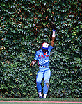 CHICAGO - JUNE 1989:  Tim Raines of the Montreal Expos catches a ball in the ivy during an MLB game versus the Chicago Cubs at Wrigley Field in Chicago, Illinois.  Raines played for the Expos from 1979-1990. (Photo by Ron Vesely)  Subject:  Tim Raines