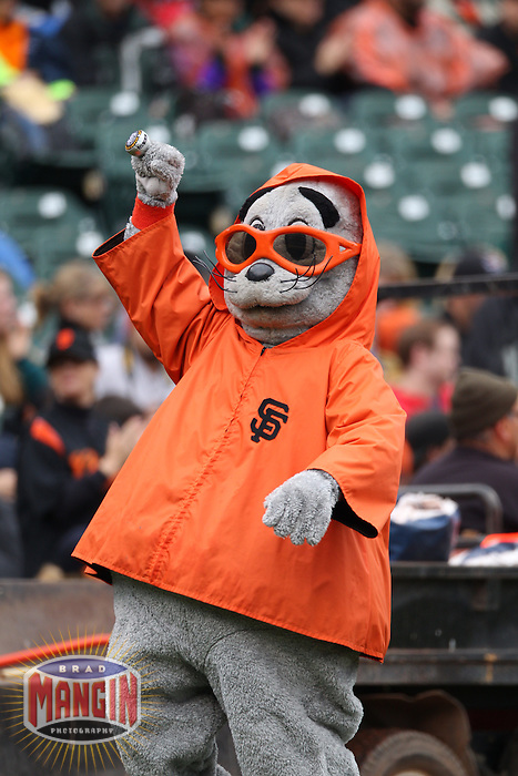 SAN FRANCISCO - JUNE 4:  San Francisco Giants mascot Lou Seal shows off his world series ring while wearing a rain coat before the game against the Colorado Rockies at AT&T Park on June 4, 2011 in San Francisco, California. Photo by Brad Mangin