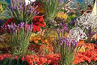 Orange, Red Roses. Tournament of Roses Parade Float, rose, perennial, flowering, shrub,  vine, genus Rosa, High dynamic range imaging (HDRI or HDR)