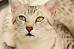 Cats / Katzen