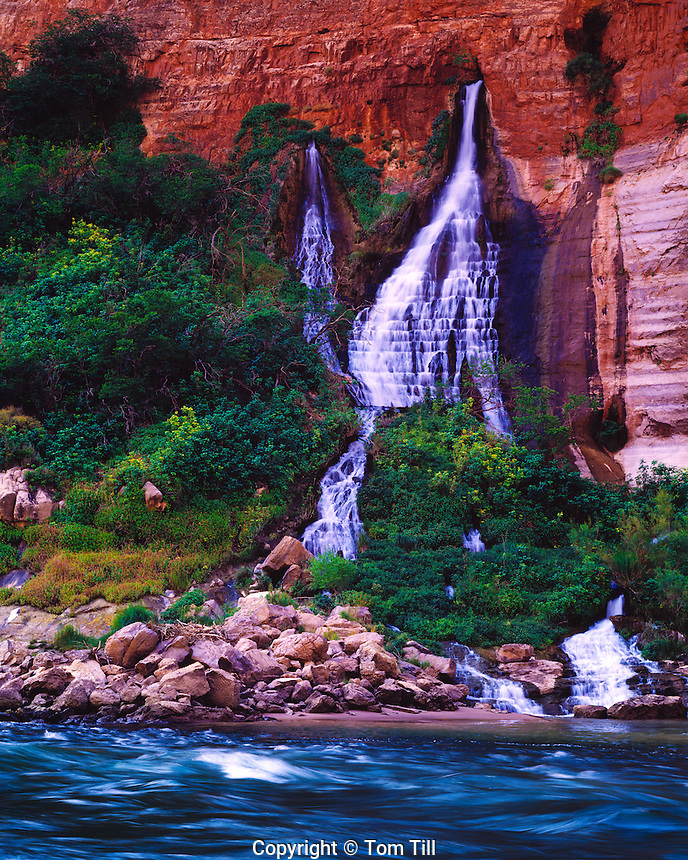 Vasey's Paradise, Grand Canyon National Park, Arizona   Large spring along Colorado River in Marble Canyon